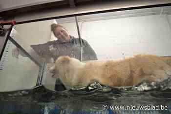 """Leerkracht laat in bijberoep honden revalideren op onderwaterloopband: """"Uniek in onze regio"""""""