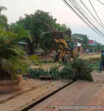 Alcaldía aclara que tala de árboles fue socializada y lamenta politización - La Palabra del Beni