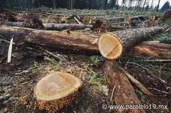 Senado pide reforzar campañas sobre tala forestal Política Oct 18 , 2021 - Paralelo 19