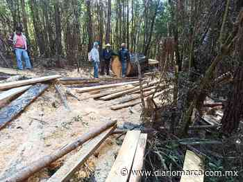 Ayuntamiento de Concepción Pápalo monta un 'show' con supuesta tala de árboles - Diario Marca de Oaxaca