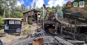 Cae red ilegal responsable de tala indiscriminada en la reserva forestal del Río Magdalena - infobae