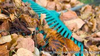 Laubrente: In diesen Fällen müssen Sie die Kosten fürs Blätterrechen übernehmen