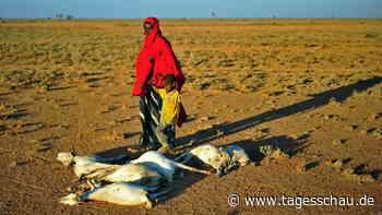 Klimawandel trifft Afrika mit voller Härte