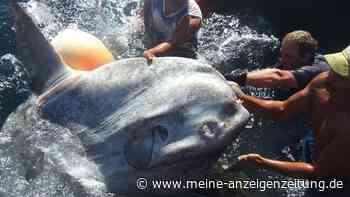 Spanien: Fischer ziehen zwei Tonnen schweren Mondfisch aus dem Wasser
