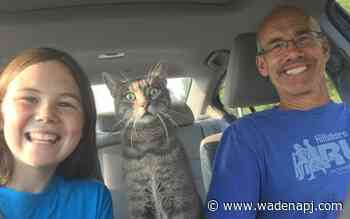 Shotgun-riding cat loves to go on excursions - Wadena Pioneer Journal
