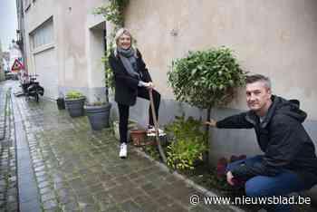 Brugge viert driehonderdste gevelplant, één straat springt eruit