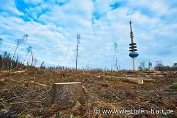 Baumpflanzaktion wird verschoben