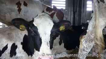 Trotz Tierschutzverstößen: Tausende Kühe nach Usbekistan transportiert - Behörden sind machtlos