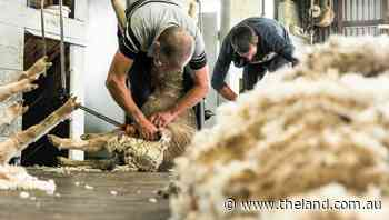 Travel bubble set to pave the way for return of Kiwi shearers