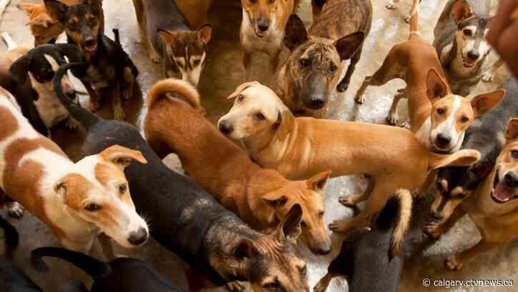 Calgary Humane Society is full of dogs, needs urgent help