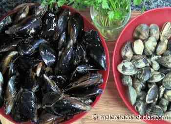 Marea roja: al igual que para Maldonado rige veda sobre moluscos bivalvos de Rocha - maldonadonoticias.com