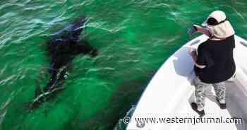Unbelievable Footage Captures Moment Labrador Retriever Kisses Gigantic Whale Shark