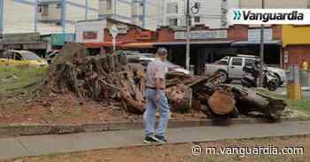 Críticas por tala de árboles en parques de Bucaramanga - Vanguardia