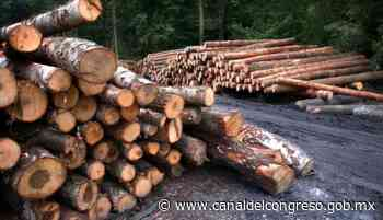 Noticias del Congreso - Senado llama a reforzar acciones para evitar la tala de bosques y selvas en México - Canal del Congreso