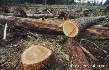 Senado pide reforzar campañas informativas sobre repercusiones de tala forestal y selvática - El Demócrata