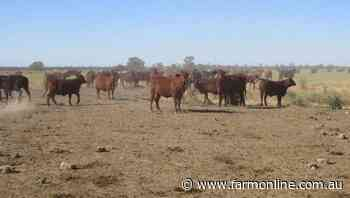 Roma auction makes $6.8m for a beef support act