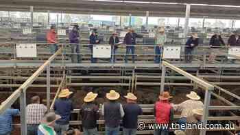 Heifers worth more than steers   Market Murmurs