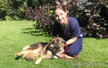 Dog warden wins RSPCA's gold award for lockdown work - Inside Croydon