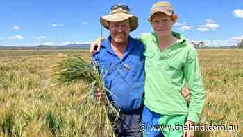 North West growers' bet on barley promises to pay dividends