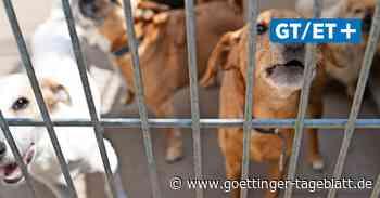 Begleiter im Lockdown: Immer mehr Halter bringen die Hunde zurück ins Tierheim