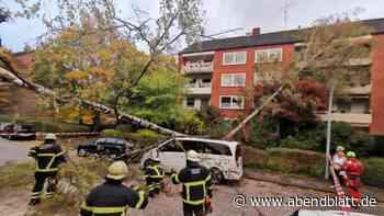 Wetter: Baum fällt auf Auto und Mehrfamilienhaus in Hamburg