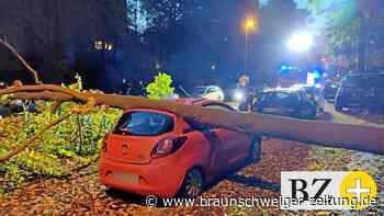 Junge Wolfsburgerin fast von umstürzendem Baum erschlagen