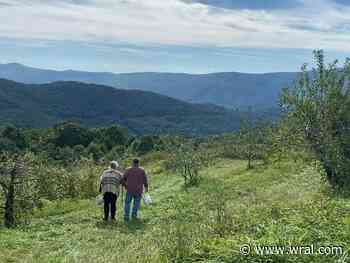 The Orchard at Altapass: 'The closest you will get to heaven before you get to heaven'