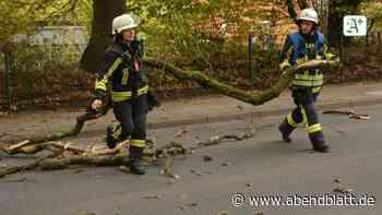Unwetter: Umgestürzte Bäume und gesperrte Straßen in Reinbek - Hamburger Abendblatt