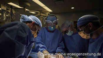 Medizin-Sensation: Schweineniere erstmals in Mensch transplantiert