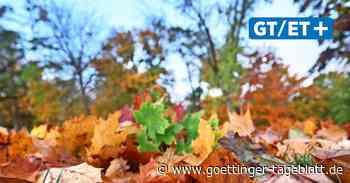 So wird das Wetter in Hannover: Kommt nach dem Herbststurm  der Goldene Oktober?