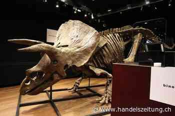 Triceratops Big John für 6,6 Millionen Euro versteigert
