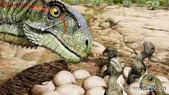 Scientists find oldest fossils of dinosaurs living in a herd