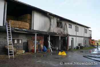 """Paardenfokkerij dreigde in vlammen op te gaan: """"Gelukkig was mijn vrouw thuis of de boel was weg"""""""