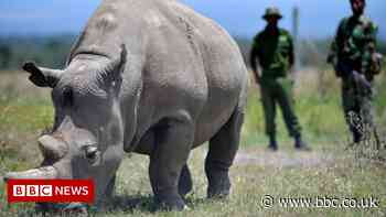 Kenyan northern white rhino Najin retired from breeding scheme
