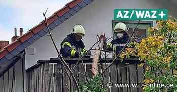 Sturm und Unwetter in Wolfsburg: Sturm: Baum stürzt gegen Wohnhaus in Heiligendorf – Bewohner schaut weiter fern - Wolfsburger Allgemeine