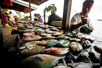 MPs Urged to Focus on Agriculture and Fisheries - Solomon Times Online