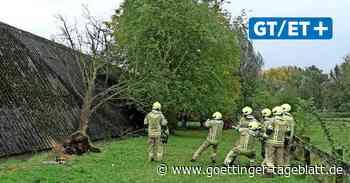 Sturmböe: Baum stürzt auf Tennishallendach in Alt-Laatzen