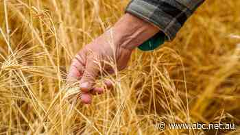 The true cost of China's barley tariff
