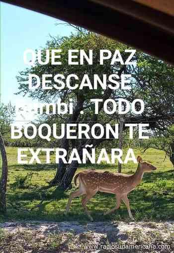 Mercedes: asesinaron a Bambi la mascota de un paraje rural - Radio Sudamericana