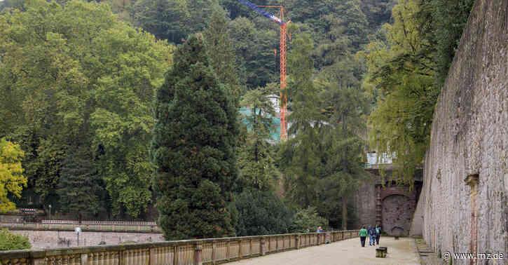 Heidelberg:  Sind Amphibien wegen der Baustelle verendet?