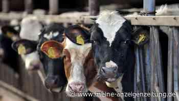 Landwirt aus Ansbach ließ Rinder verhungern – jetzt muss er sich vor Gericht verantworten