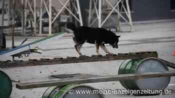 Training für Trümmerhunde in Erding