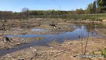 Province installs 'control structure' to protect Fredericton wetland that was accidentally drained - CBC.ca