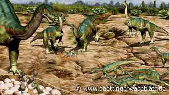 Studie: Spektakulärer Fund enthüllt Sozialleben früher Dinosaurier