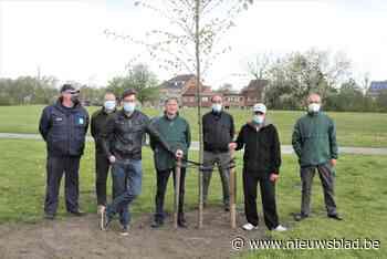 Gemeente wil nog deze legislatuur 13.000 extra bomen planten - Het Nieuwsblad