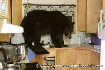 Bold bear breaks into West Kootenay family home - vancouverislandfreedaily.com