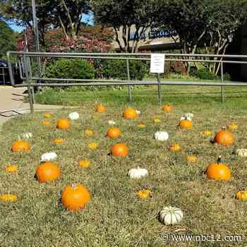 HCA Virginia hospital provides rehab patients who haven't been outside in weeks with pumpkin patch - WWBT NBC12 News