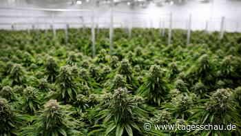 Kanadas Erfahrungen mit der Legalisierung von Cannabis