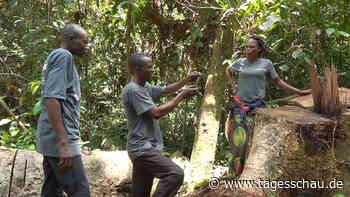 Abholzung in DR Kongo: Kampf um den Regenwald
