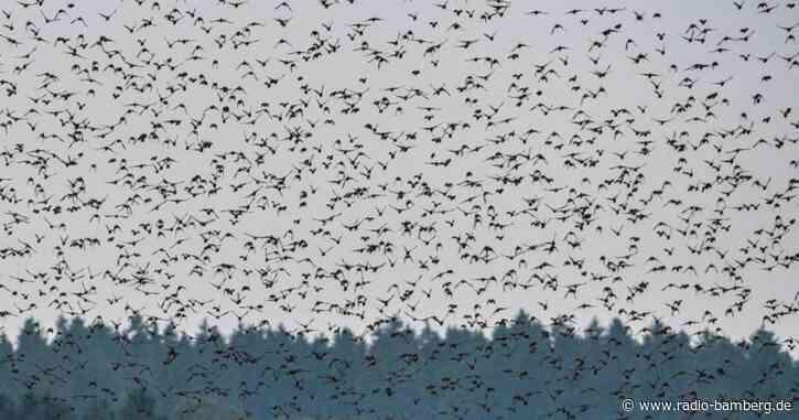 Vogelzug in vollem Gange: Weißstorch bleibt öfter daheim
